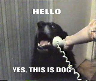 hello dog.jpg